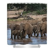 Elephants Crossing The River Shower Curtain