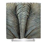 Elephant's Tail Shower Curtain by Mae Wertz