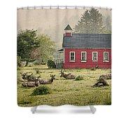 Elk In The School Yard Shower Curtain