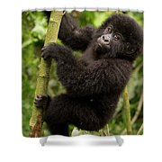 Endangered Mountain Gorillas Habitate Shower Curtain