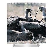 Eurasian Griffon Vulture Gyps Fulvus Shower Curtain