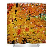 Fall Colors 2014-3 Shower Curtain