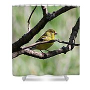 Female American Goldfinch Shower Curtain