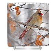 Female Cardinal In Winter Shower Curtain