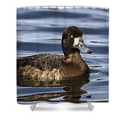 Female Scaup Shower Curtain