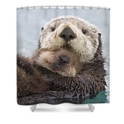 Female Sea Otter Holding Newborn Pup Shower Curtain