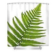 Fern Leaf Shower Curtain by Elena Elisseeva
