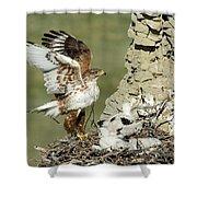 Ferruginous Hawk And Chicks Shower Curtain