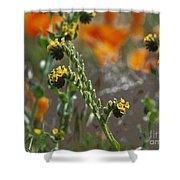 Fiddleneck Flowers Shower Curtain