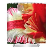 Flaming Parrot Tulip Shower Curtain
