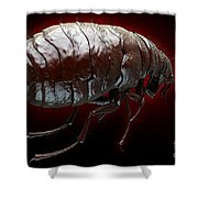 Flea Pulex Irritans Shower Curtain