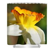 Floral Cup  Shower Curtain