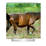 Florida Spanish Horse Shower Curtain