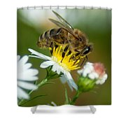 Flowering Bee Shower Curtain