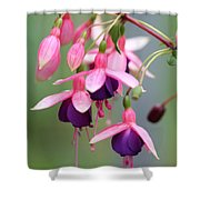 Fuchsia Named Lambada Shower Curtain