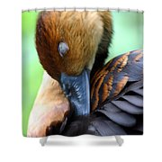 Fulvous Whistling Duck Shower Curtain