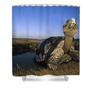 Galapagos Giant Tortoise Wallowing Shower Curtain