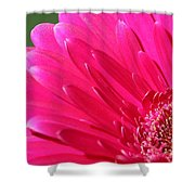 Gerbera Daisy Named Raspberry Picobello Shower Curtain