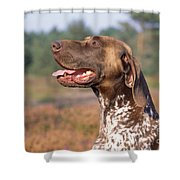 German Short-haired Pointer Dog Shower Curtain