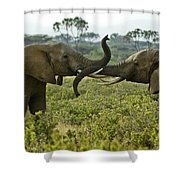 Getting Acquainted Shower Curtain