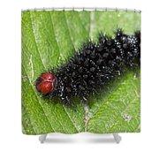 Glanville Fritillary Butterfly Caterpillar - Melitaea Cinxia Shower Curtain