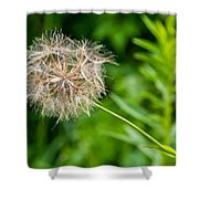 Goat's Beard Shower Curtain
