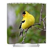 Gold Finch Shower Curtain