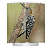 Golden-fronted Woodpecker Shower Curtain