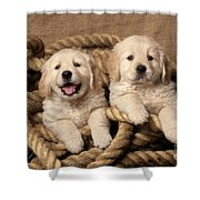 Golden Retriever Puppies Shower Curtain