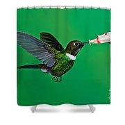 Gorgeted Sunangel Shower Curtain