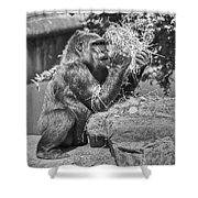 Gorilla Eats Black And White Shower Curtain
