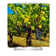 Grapes On The Vine Shower Curtain by Jeff Swan