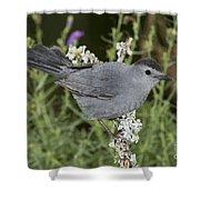 Gray Catbird Shower Curtain