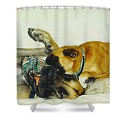 Great Dane And Australian Sheperd Shower Curtain