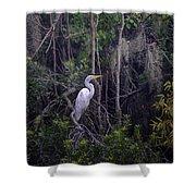 Lowcountry Marsh White Heron Shower Curtain