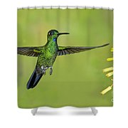 Green-crowned Brilliant Shower Curtain