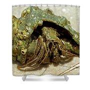 Green Striped Hermit Crab Shower Curtain