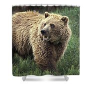 Grizzly Bear Shower Curtain
