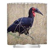 Ground Hornbill Shower Curtain