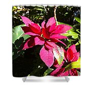 Hawaiiana 5 Shower Curtain