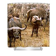 Herd Of Cape Buffaloes Syncerus Caffer Shower Curtain