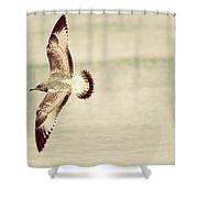 Herring Gull In Flight Shower Curtain by Karol Livote