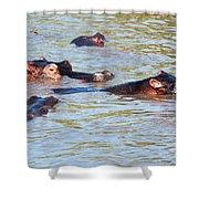Hippopotamus Group In River. Serengeti. Tanzania. Shower Curtain