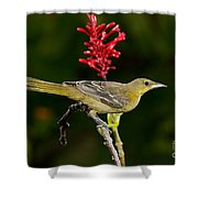Hooded Oriole Juvenile Shower Curtain
