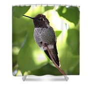Hummingbird Hangout Shower Curtain