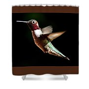 Hummingbird Male Anna Shower Curtain