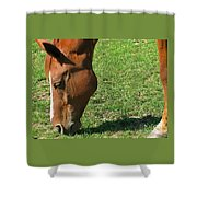 In Green Pasture Shower Curtain
