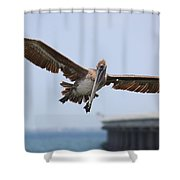 Incoming Pelican Shower Curtain