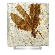 Insect Fossil Shower Curtain