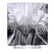 Iris 11 Shower Curtain